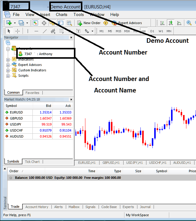 Account Name and Account Number on Metatrader 4 Platform Account